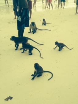 Welcome to Monkey Island!