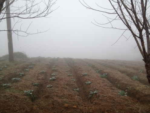 This photo shows how thick the fog could get on the farm