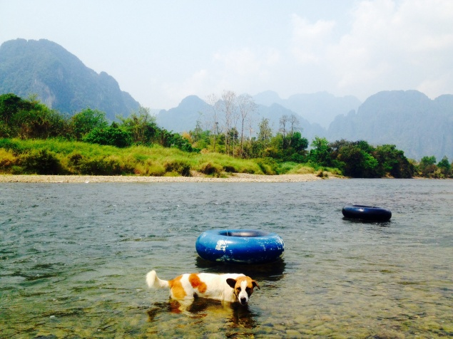 Dogs and tubes in Vang Vieng