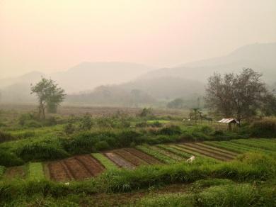 Farmland in Luang Prabang
